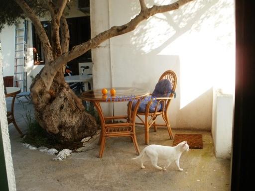 taverna Kretoje