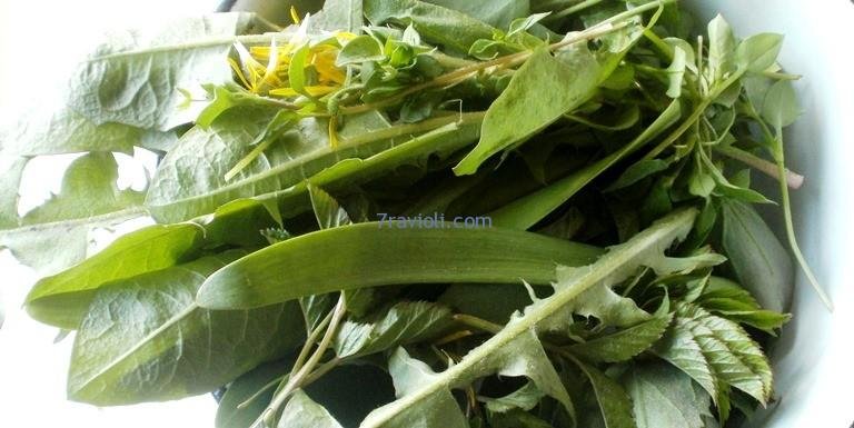 valgomi laukiniai augalai