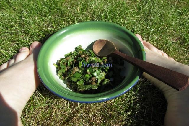 lesiu zoliu salotos